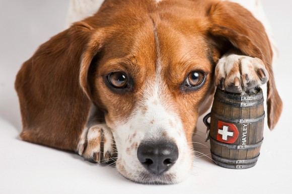 Dog Collar Whiskey Barrel